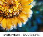 the flower is covered with... | Shutterstock . vector #1229131348