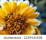 the flower is covered with... | Shutterstock . vector #1229131528