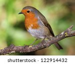 portrait of a robin | Shutterstock . vector #122914432