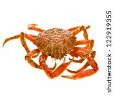 Spider Crab  Isolated On A...