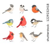 Stock vector set of cute winter birds isolated on white background 1229232418