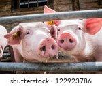 Piglets At A Farm