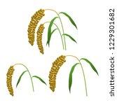illustration of the millet   Shutterstock .eps vector #1229301682