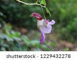 tain nok keaw at chiang dao | Shutterstock . vector #1229432278