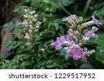 soft focus  closeup pink... | Shutterstock . vector #1229517952