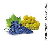 fresh  nutritious  tasty grapes.... | Shutterstock .eps vector #1229598562