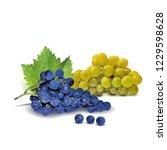 fresh  nutritious  tasty grapes.... | Shutterstock .eps vector #1229598628