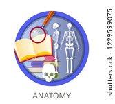 anatomy of human  school...   Shutterstock .eps vector #1229599075