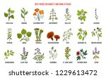best herbs for anxiety and... | Shutterstock .eps vector #1229613472