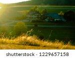 sunset grass in schwarzwald ...   Shutterstock . vector #1229657158