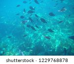 snorkeling with fish. | Shutterstock . vector #1229768878