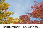 colorful of different color... | Shutterstock . vector #1229845558