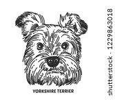 yorkshire terrier face. dog... | Shutterstock .eps vector #1229863018