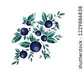 wild berries vector  food full... | Shutterstock .eps vector #1229886838
