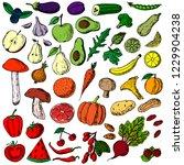 hand drawn set of fruits ... | Shutterstock .eps vector #1229904238