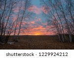 winter sunsets in the north are ... | Shutterstock . vector #1229924212
