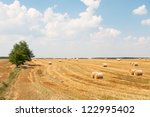 Harvested Wheat Field In...