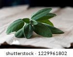 a fresh sage  also called... | Shutterstock . vector #1229961802