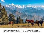 wild horses graze the himalayan ... | Shutterstock . vector #1229968858