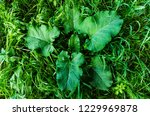 green plant with leaves | Shutterstock . vector #1229969878