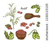 lentil plant hand drawn... | Shutterstock .eps vector #1230115135