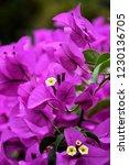 Purple Paper Flower Or ...