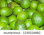 avocado also refers to the... | Shutterstock . vector #1230226882