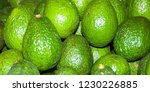 avocado also refers to the... | Shutterstock . vector #1230226885