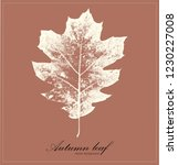 beige brown background with... | Shutterstock .eps vector #1230227008