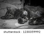 gray fluffy cat lying on the... | Shutterstock . vector #1230359992
