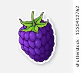 vector illustration. blackberry ... | Shutterstock .eps vector #1230412762