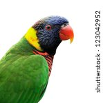 close up of rainbow lorikeet... | Shutterstock . vector #123042952