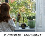a woman standing at the window...   Shutterstock . vector #1230480595