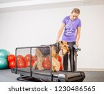 dog training in the fitness club | Shutterstock . vector #1230486565