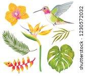 watercolor marker  tropical... | Shutterstock . vector #1230572032