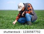 senior farmer in filed... | Shutterstock . vector #1230587752