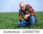senior farmer in filed... | Shutterstock . vector #1230587755