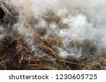 smoke  carbon dioxide from hay... | Shutterstock . vector #1230605725