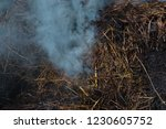 smoke  carbon dioxide from hay... | Shutterstock . vector #1230605752
