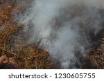 smoke  carbon dioxide from hay... | Shutterstock . vector #1230605755