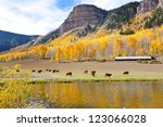 Cattle Grazing High In The...