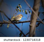 colorful songbird perched on... | Shutterstock . vector #1230718318