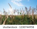 meadow grass and flowers... | Shutterstock . vector #1230744958