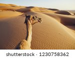 personal view from riding on... | Shutterstock . vector #1230758362
