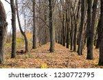 autumn park. late autumn in the ... | Shutterstock . vector #1230772795