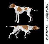 english pointer dogs orange and ... | Shutterstock .eps vector #1230850282