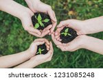 children holding young plant in ... | Shutterstock . vector #1231085248