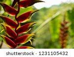 extrange plant in xilitla mexico | Shutterstock . vector #1231105432