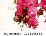 pink flower in life | Shutterstock . vector #1231146655