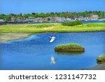 Great White Egret Marsh Padanaram Village Harbor Sailboats Piers Moorings Bridge Buzzards Bay Dartmouth Masschusetts